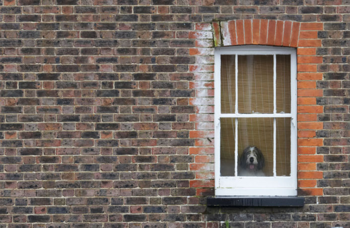How Much Is That Doggy In The Window by Chris Marwood Photography