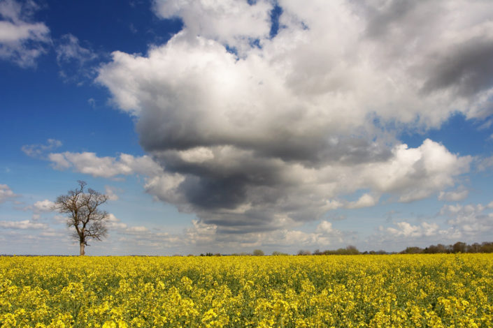 Sussex Landscape Photography by Chris Marwood