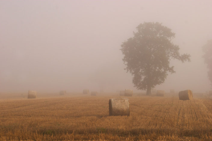 Kentish Bales In The Mist by Chris Marwood Photography