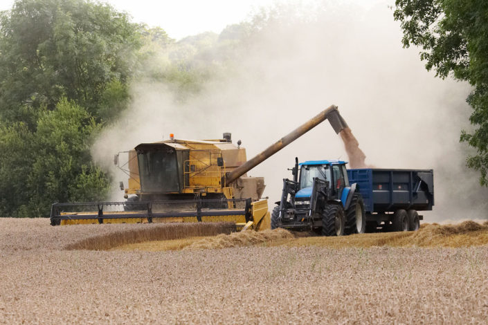 Wheat harvesting in Kent