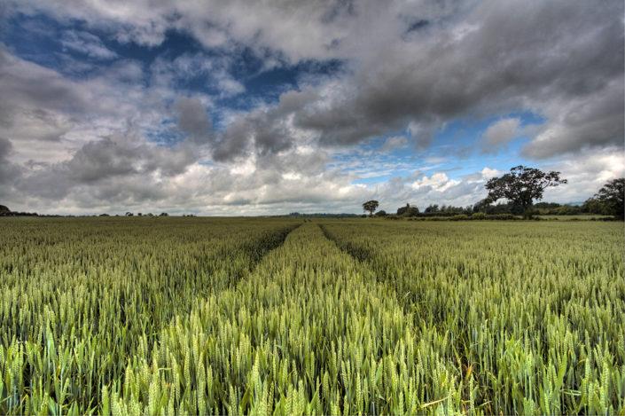 Kent Landscape Photography 2